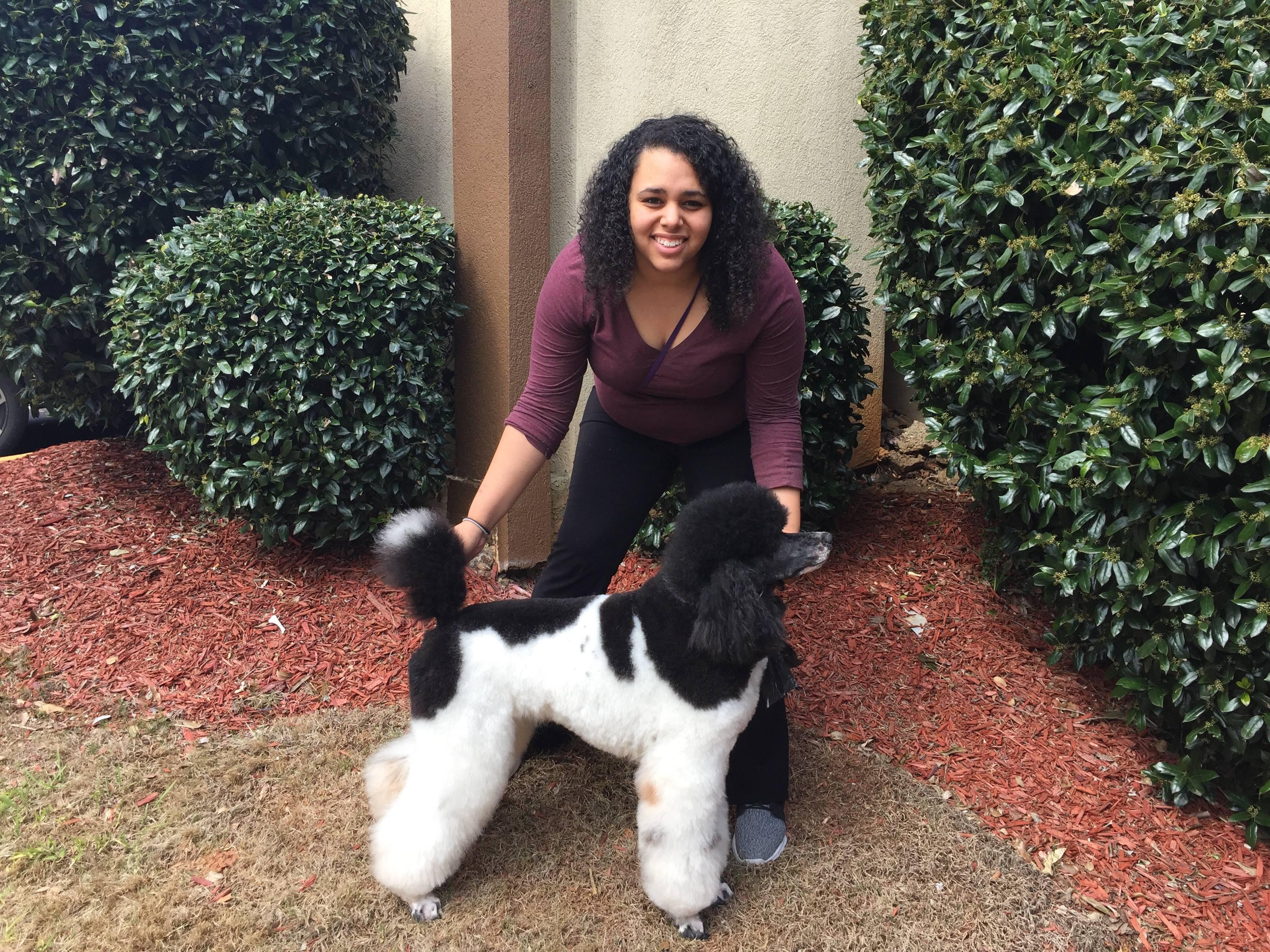 pet grooming, dog, show dog