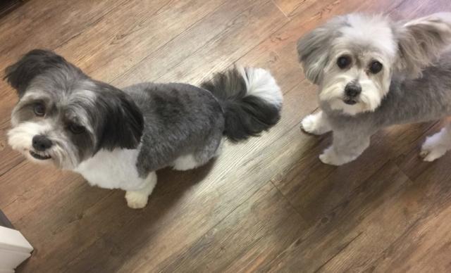 pet grooming, dog